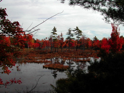 All, Fall, Trees, Reflection, Canada, Frontenac Park