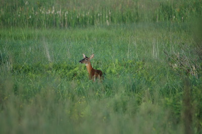 All, Deer, Fields,  Deer, Canada, West Port