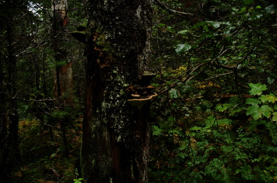 All, Trees, Skagway Hike, USA, Skagway