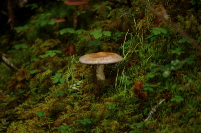 All, Mushrooms, Toadstool, Skagway Hike, USA, Skagway