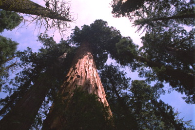 All, USA,California,Trees, Yosemite National Park